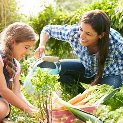 5 Tips For Your Summer Garden | Florida Gardening
