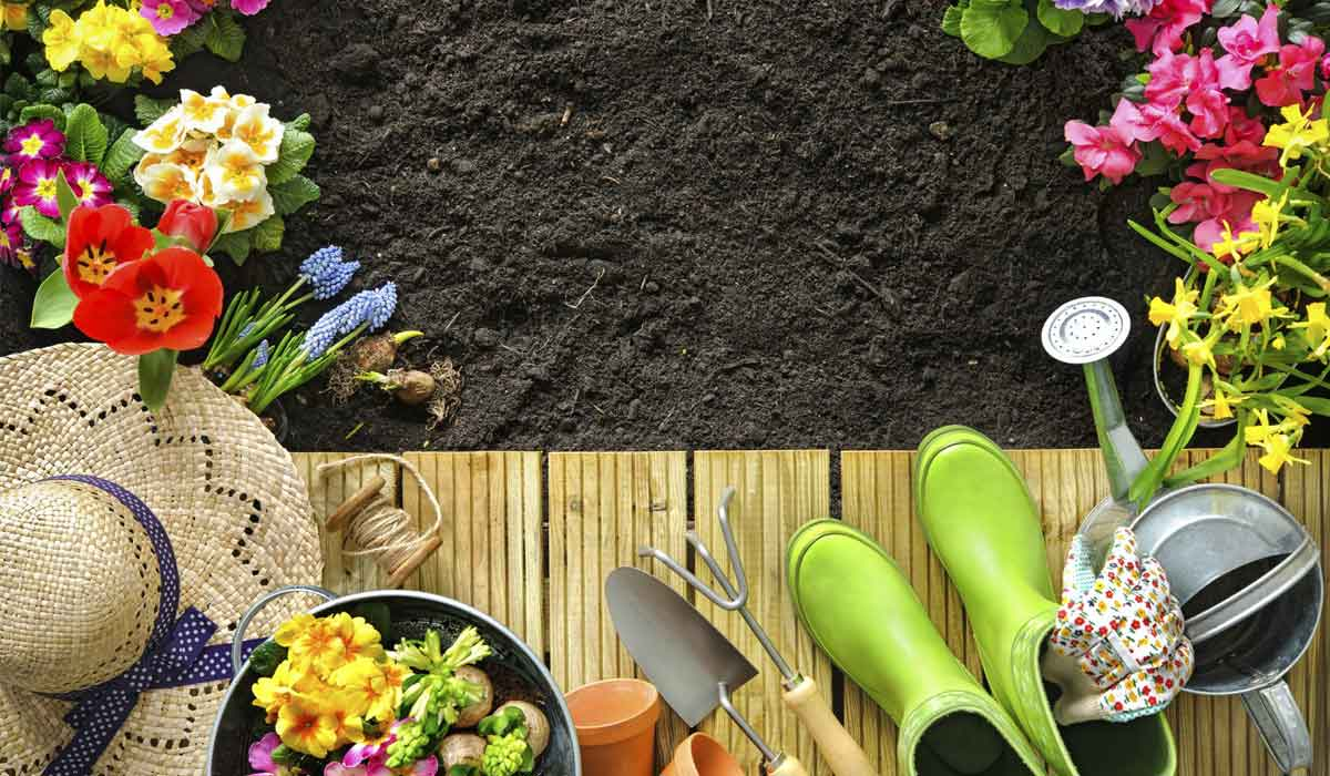 5 great florida gardening tips for summer gardening project - Summer time gardening tips ...