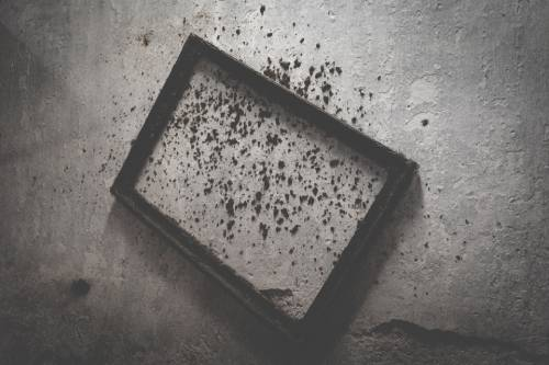 How to Clean Black Mold in Your Home